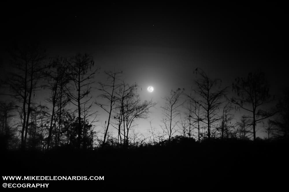 Moonrise over Big Cypress National Preserve