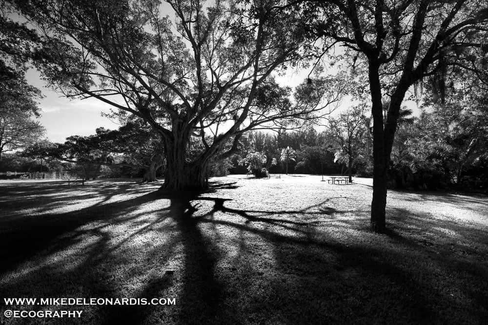 Matheson Hammock Park in Miami, Florida