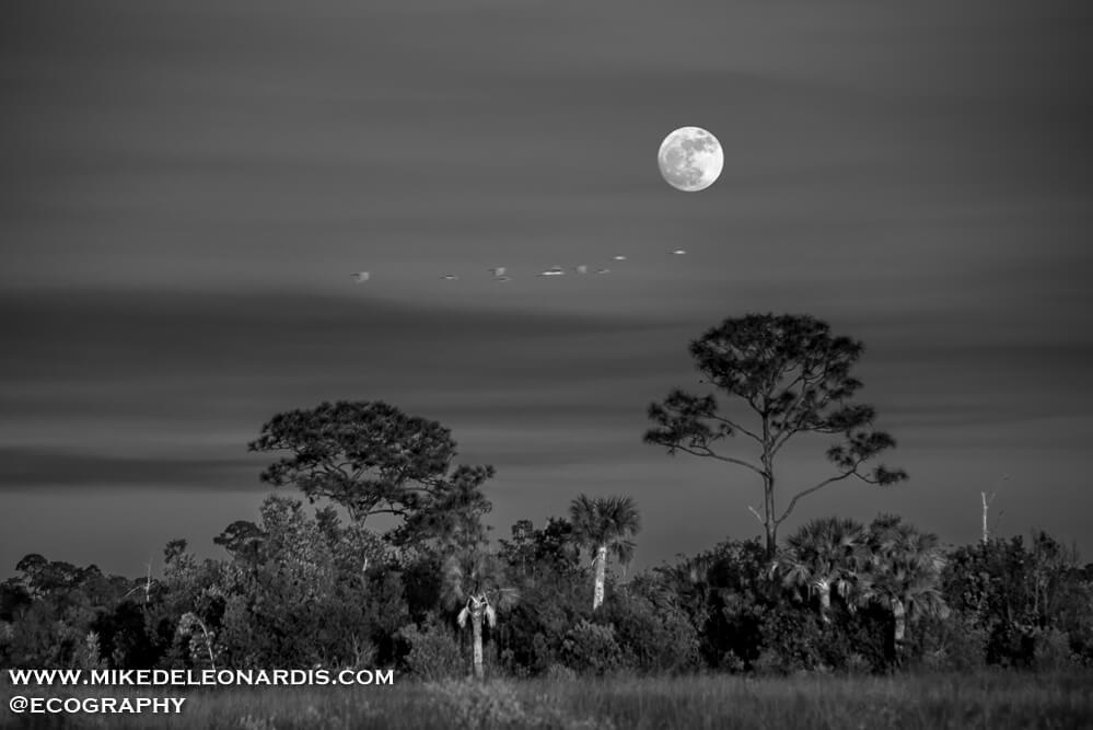 Big Cypress Moonrise